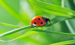 Ladybugs are always a good choice -- and good luck, too.