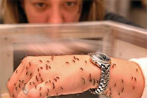 Person with insects on arm