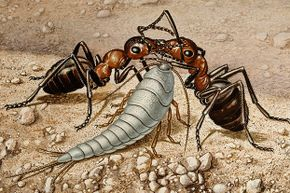 This drawing shows a silverfish between two ants.