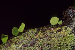 Leafcutter ants do their thing in a Costa Rican jungle.