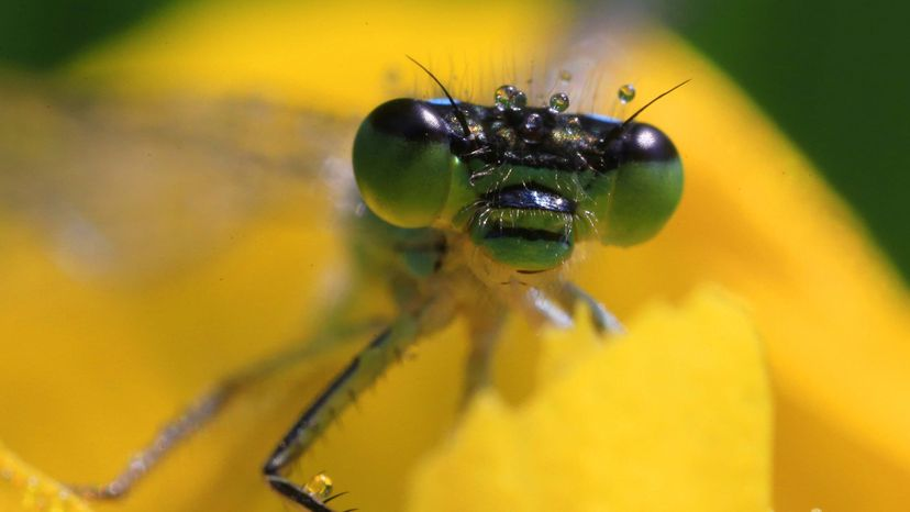 insect populations, decline