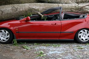 Since this tree certainly didn't carry its own insurance, we hope the driver had comprehensive coverage (which applies to the car). See more car safety pictures.