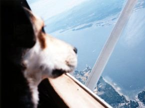 International travel can be fun and exciting -- especially when you can share the adventure with a loved one. Sometimes that loved one is a beloved pet. See more pet pictures. 