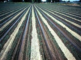 Special furrow systems like these enhance water management. Wide-spaced furrows work like alternative-row irrigation, except that every row is irrigated and the rows are further apart.
