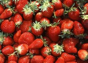 These strawberries probably benefited from proper irrigation and mulching.