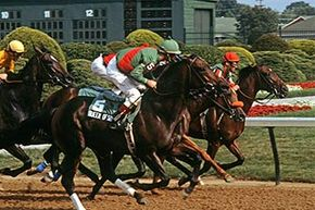 Race horses have a depreciation of three years, according to IRS tables.