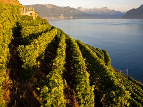 Although the Jura region is capable of producing a wide selection of wines, its output is dominated by Chardonnays, a worldwide favorite. See our collection of wine pictures.