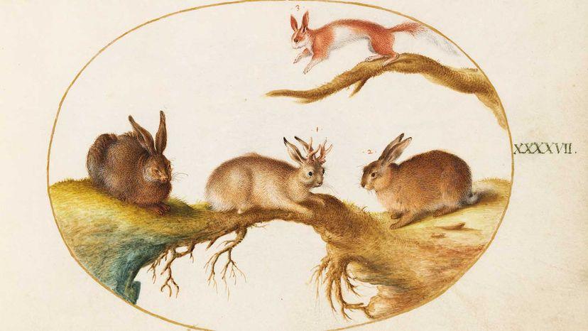 """约里斯·赫夫纳格尔(Joris Hoefnagel)的《动物类群和爬行类(Terra)》板块第XLVII,大约1575年,显示了一只""""有角的野兔""""。""""border="""