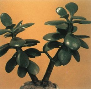 Jade plant's fleshy leaves grow on thick stems. See more pictures of house plants.