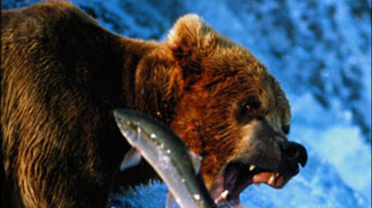 Bears throughout the Year