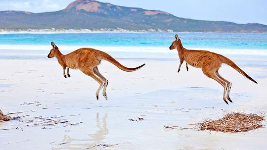 Why Do Kangaroos Hop?
