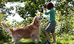One of the easiest tricks for a child to teach a dog is the canine handshake.