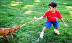 The tricky part to playing tug of war is teaching your dog to drop the toy on command.
