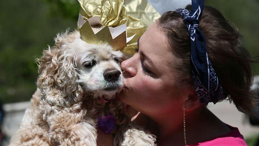 girl kisses a dog