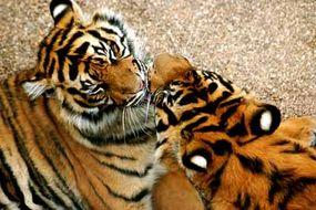 Many animal species exhibit kissing-like behaviors.