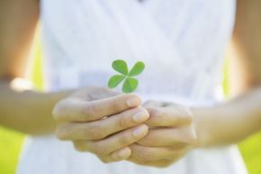 You're lucky indeed if you find a four-leaf clover -- your chances of finding one are one in 10,000.