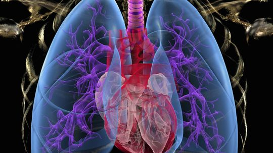How Your Lungs Work