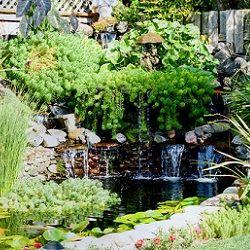 Lush plants make this subtle waterfall a hidden gem.