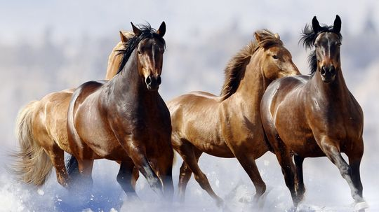 Did a Russian lake flash-freeze a herd of horses?