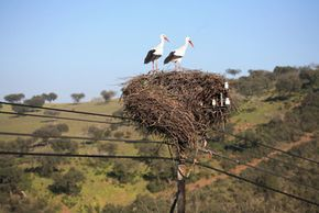 These birds look pleased that phone companies still pay billions of dollars a year to maintain their networks, despite losing landline customers.