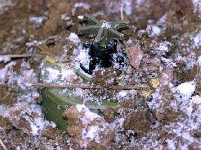 This PMA-2 landmine was found hidden under snow and foliage in Rajlovac, Bosnia.