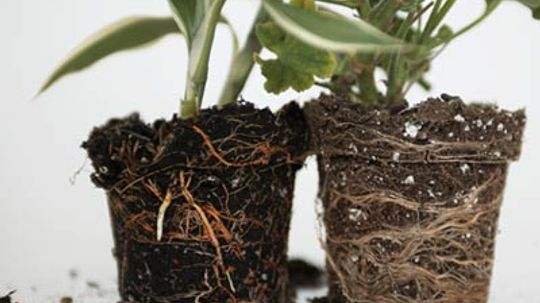 How to Landscape with Different Soil Types