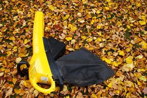 Vacuuming up leaves and other plant debris is a more precise, less noisy way of cleaning up your lawn.