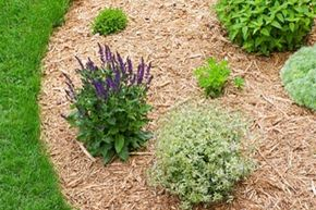 You'd be surprised how important lawn edging is to the beauty of your front yard.