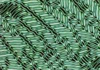 Most liquid crystal molecules are rod-shaped and are broadly categorized as either thermotropic or lyotropic.