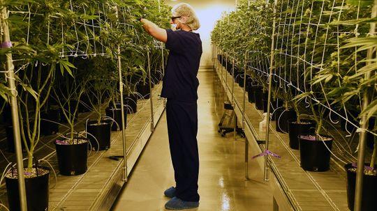 Majority Want Legal Marijuana To Be the Norm