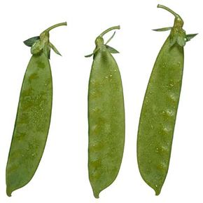 Lima beans are related to