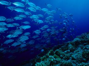 Oceans act as one of Earth's biggest carbon sinks.