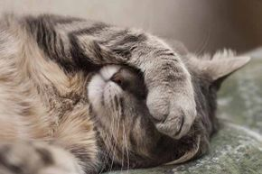 Some feline illnesses will make Kitty go anywhere -- not just in the litter box.