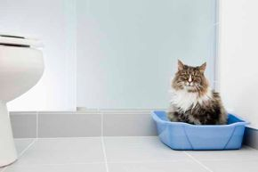 Maybe Kitty doesn't want to share her bathoom space with you!