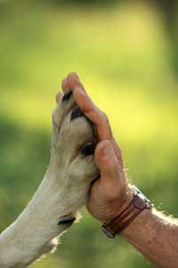 High five with a gray wolf. See more wolf pictures.
