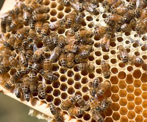 Honey may gradually expose the body to allergens which could immunize a person against allergies.