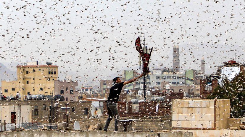 locust swarm