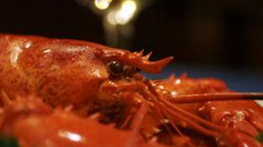 Science Says Lobsters Can Live Forever, But They're Still Delicious