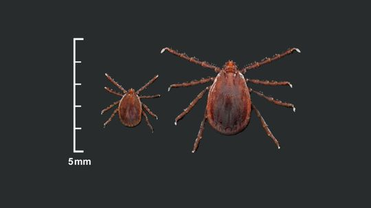 New Tick Species Appears in U.S. for First Time in 50 Years