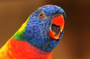 Superstition holds that birdsong holds the secret to understanding the world.