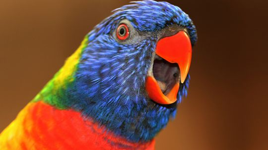 10 Superstitions About Birds