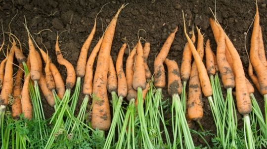 Are carrots really good for your eyesight?