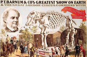 Barnum didn't let a little thing like a dead elephant stop him; he simply put the remains on display!