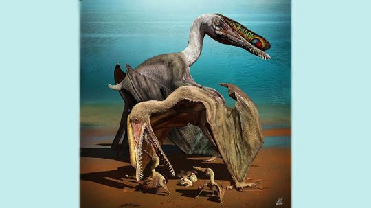 Huge Cache of Pterosaur Eggs Discovered in China