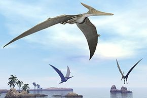 Pteranodons shaped how pterosaurs are represented in today's popular imagination.