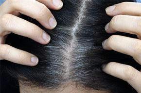 Plucking, in general, can cause trauma to your hair follicles. Would you rather have gray locks or none at all?