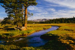 Early spring snow melt fills Budd Creek that flows through the grassy fields of Tuolumne Meadows.