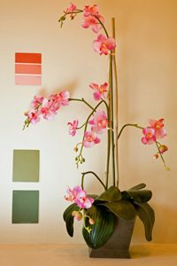 Use your favorite things to inspire your paint choices.