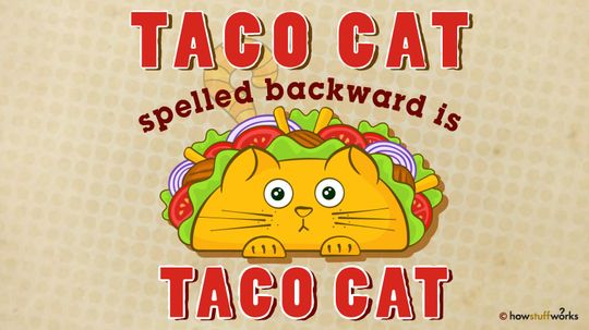 Taco Cat: It's a Palindrome!