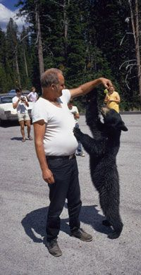 This man is not only breaking the law, but he could be contributing to this cub's death.